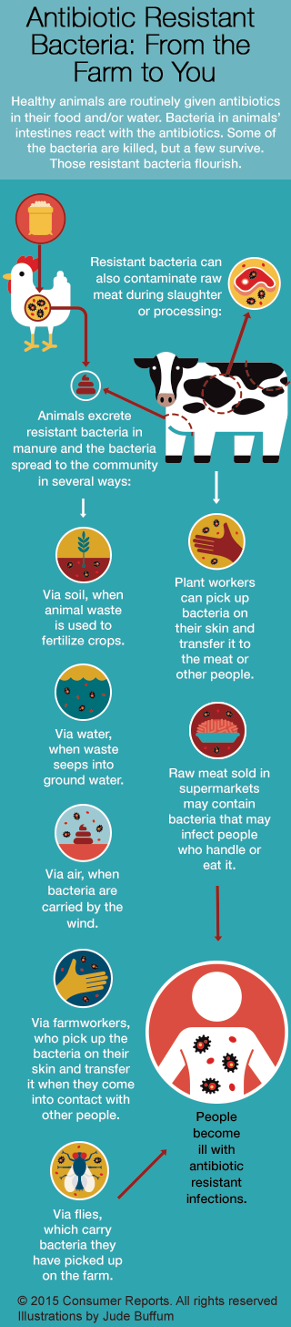 Can Antibiotics For Animals Be Put In Their Food